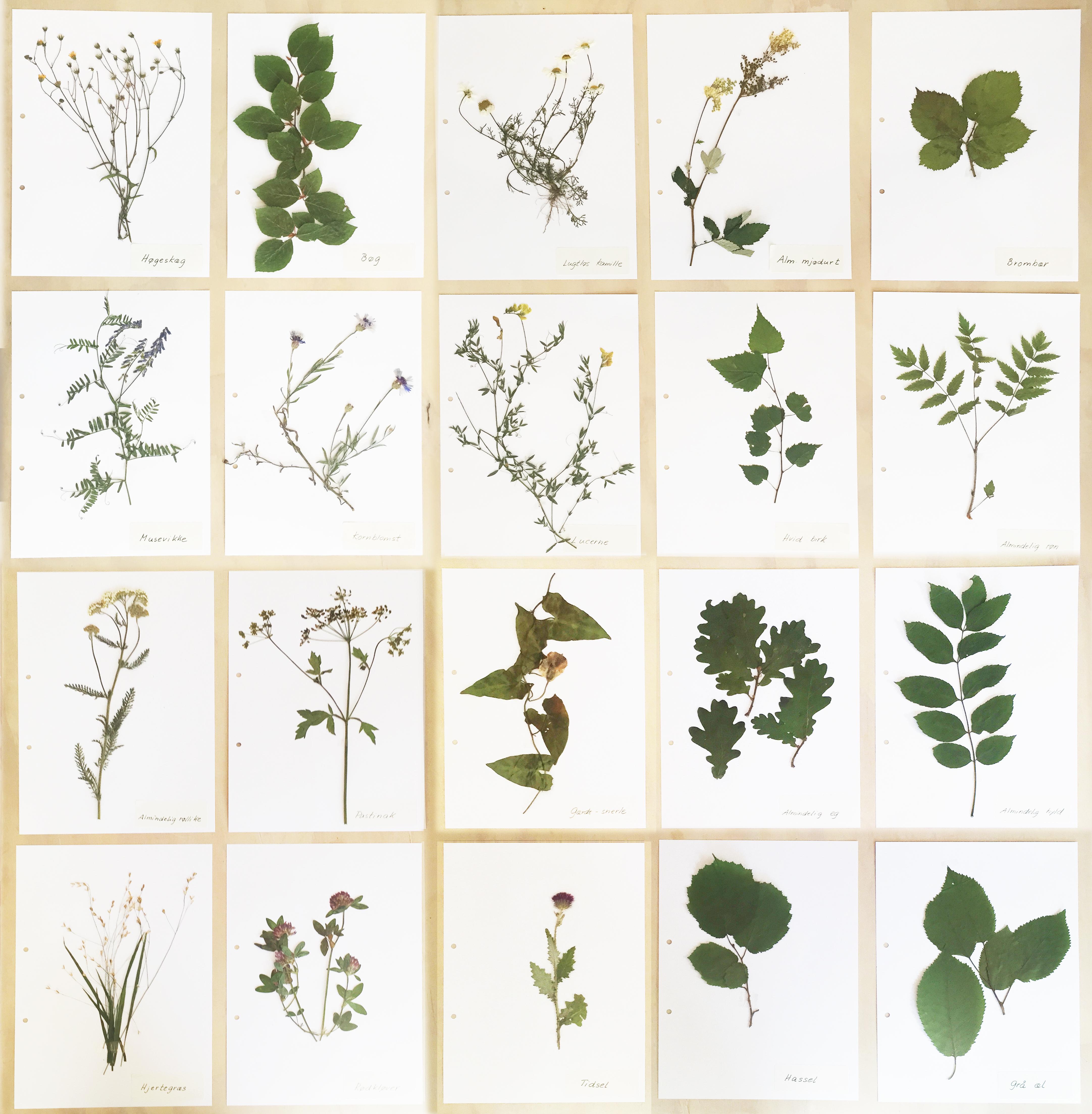 herbarium_samlet-endelig